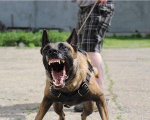 growly dog
